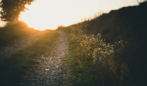 Embrace Spiritual Growth