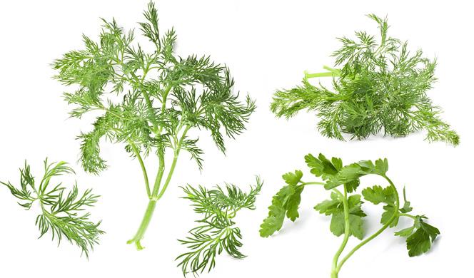8-herbs