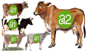 A1 vs A2 Cow's Milk: What's the Difference, Benefits, and Nutrition