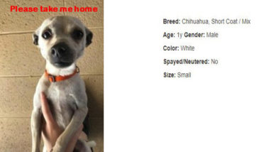 """Cosmo Is Unforgettable–Another """"Tail"""" from the Shelter"""