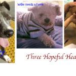 Three Hopeful Hearts